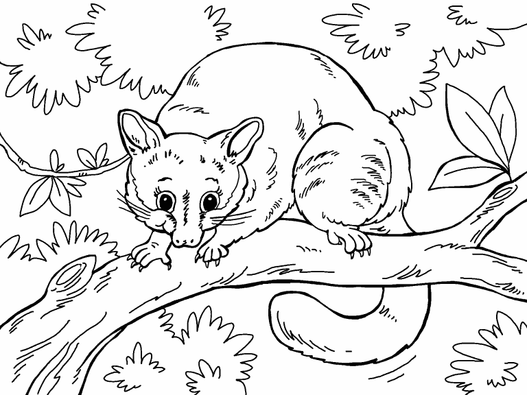 Possum Coloring Page Coloring Pages 4 U
