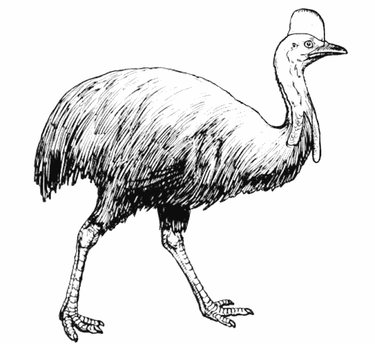 cassowary coloring pages - photo#26