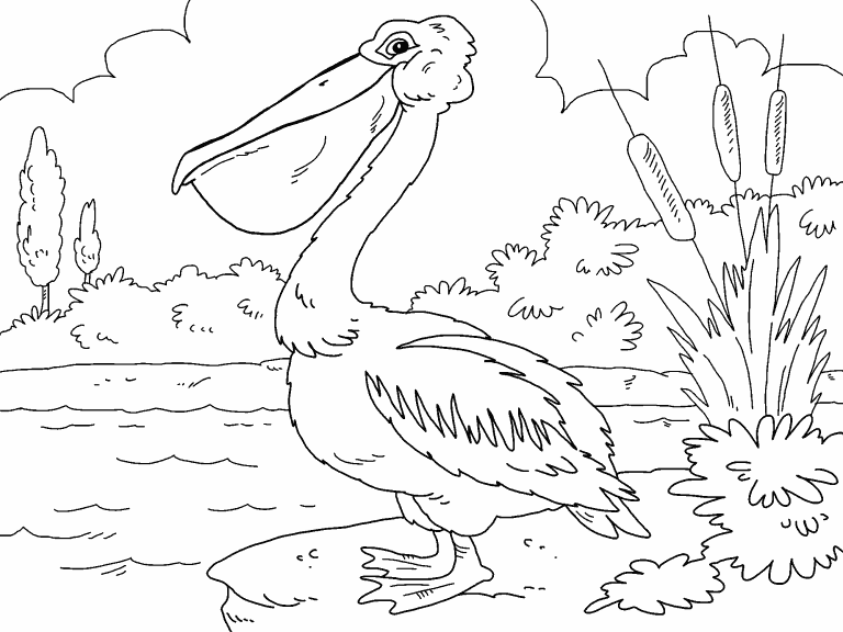Pellicantoprint Coloring Page - Free Pelican Coloring Pages ... | 576x768